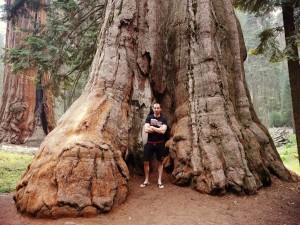 sekvojový les